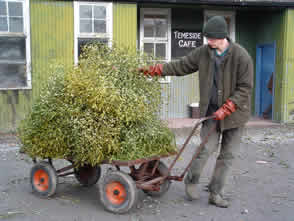 Carting away of the Mistletoe after the sale